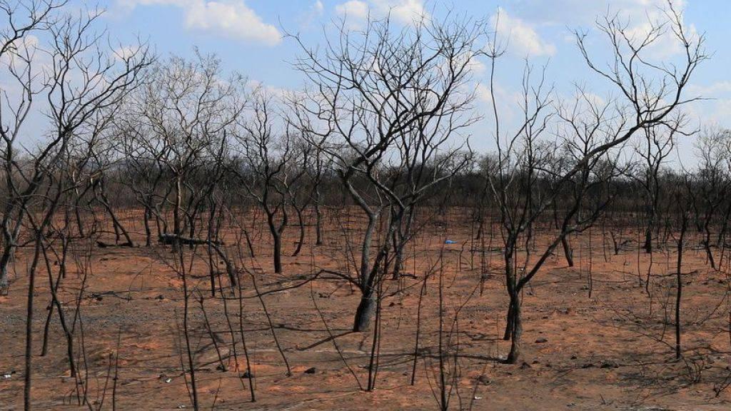 Brandstifter in Bolivien gefährden einzigartiges Ökosystem