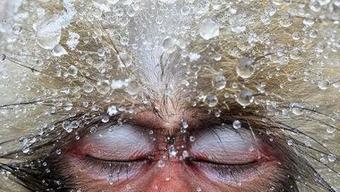 Die Fotoausstellung der Wildlife Photographer of the Year war ein Publikumsmagnet