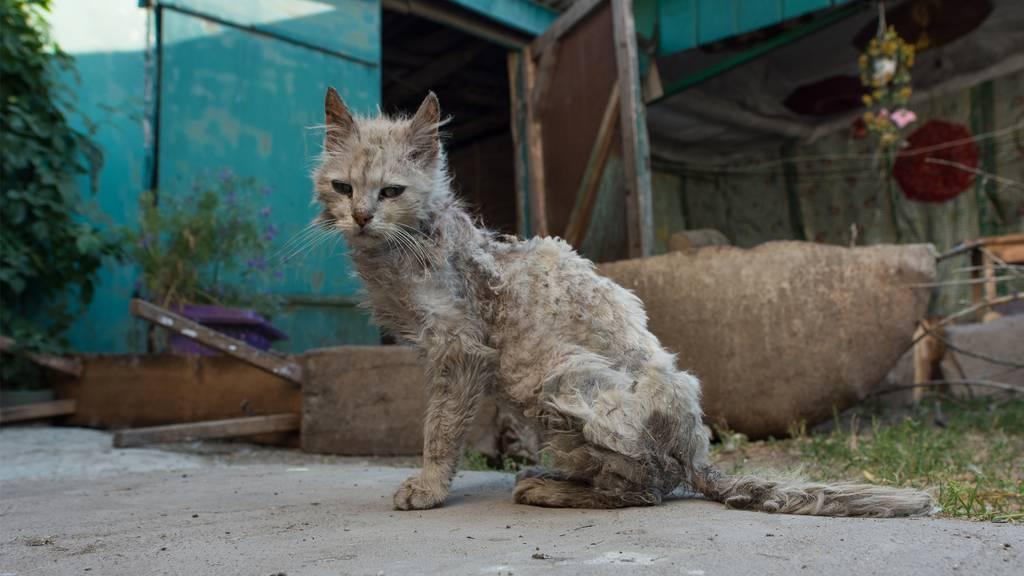 Insgesamt wurden im Haus 18 verwahrloste Katzen beschlagnahmt. (Symbolbild)