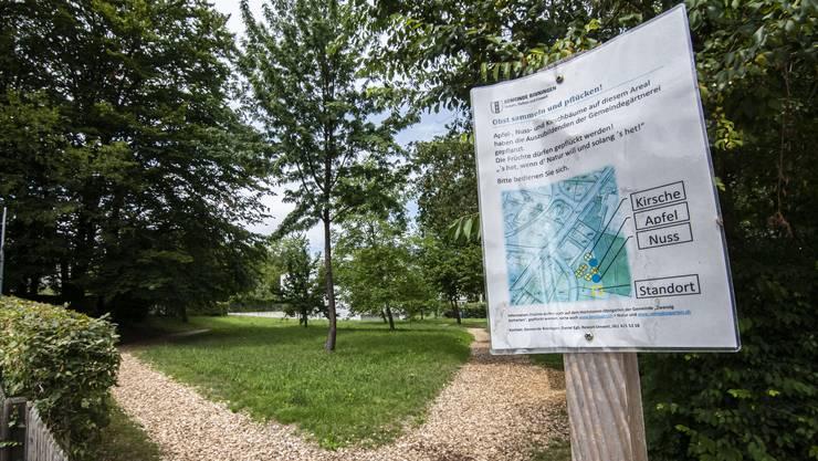 Die Gemeinde hat Obstbäume pflanzen lassen, alle dürfen Früchte pflücken. Im Bild: Die Wiese, die von den Lehrlingen der Gemeindegärtnerei zum Üben genutzt wird.