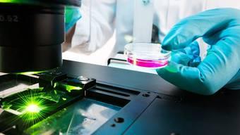 Die DNA-Reparaturmechanismen in Zellen wurden per Fluoreszenz-Mikroskopie untersucht.