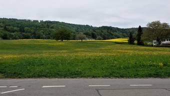 Hier auf der Hintermatt im Bergdietiker Ortsteil Kindhausen soll ein neues Alterszentrum entstehen. Das Bundesgericht hat eine Beschwerde dagegen abgewiesen. Dem Widerstand tut dies keinen Abbruch.