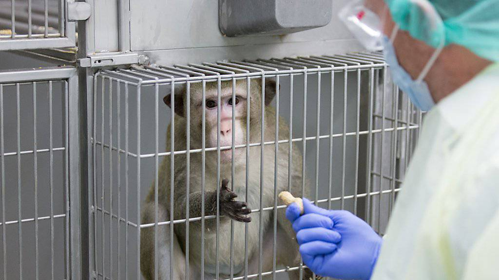 Zahl der Tierversuche weiter gesunken