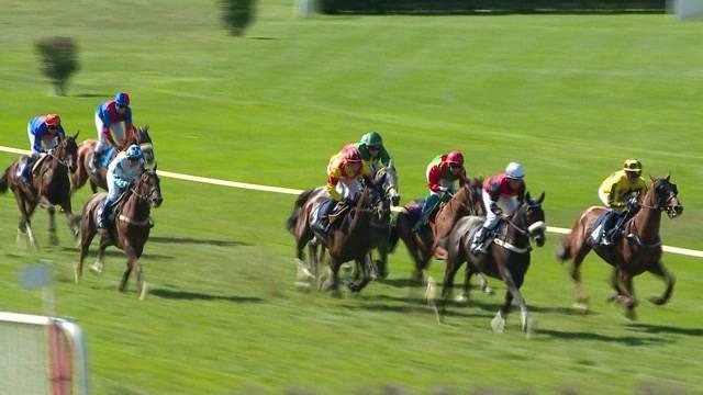 Pferderennen im Schachen Aarau