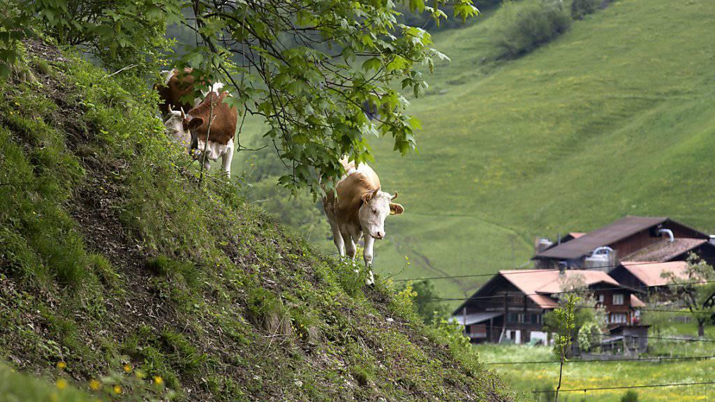 Bauern sollen auf kleinen Höfen für die Region produzieren