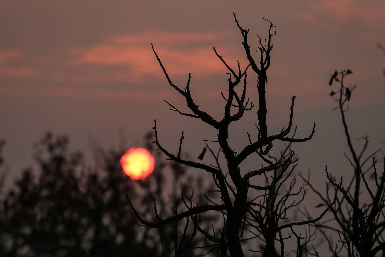 Brände im Amazonas: Der Hashtag #prayforamazonia geht auf Twitter und Instagram viral. (© Michael Dantas / WWF Brasilien)
