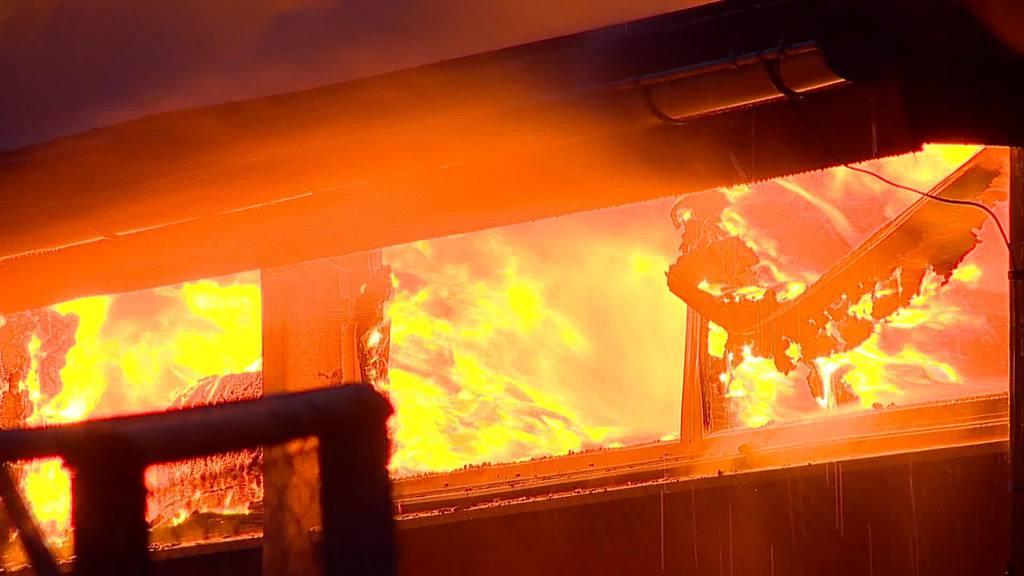 Flammen in Pferdestall: Ein Dutzend Tiere bleiben unverletzt