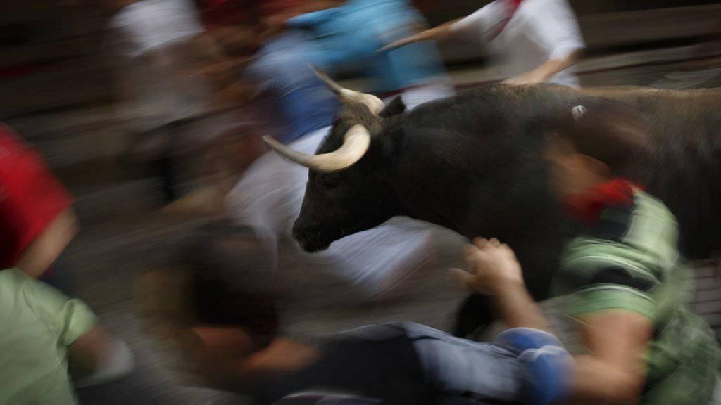 Ein Stier wird durch die Gassen gejagt - in zahllosen Orten Spaniens ist die Stierhatz ein fester Bestandteil der traditionellen Volksfeste (Archiv)