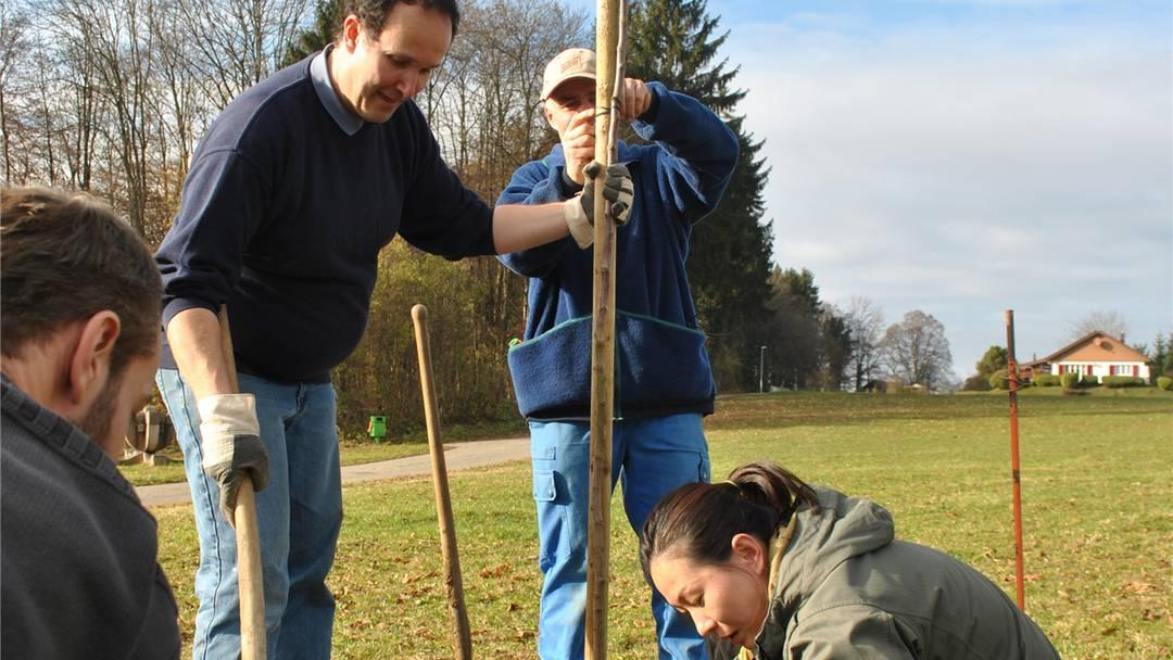 Einsatz in Zuzgen auf dem Hof von Roland und Gisela Meyer: Zehn Mitarbeiter von Samsung Electronics haben geholfen, 23 Obstbäume zu pflanzen.