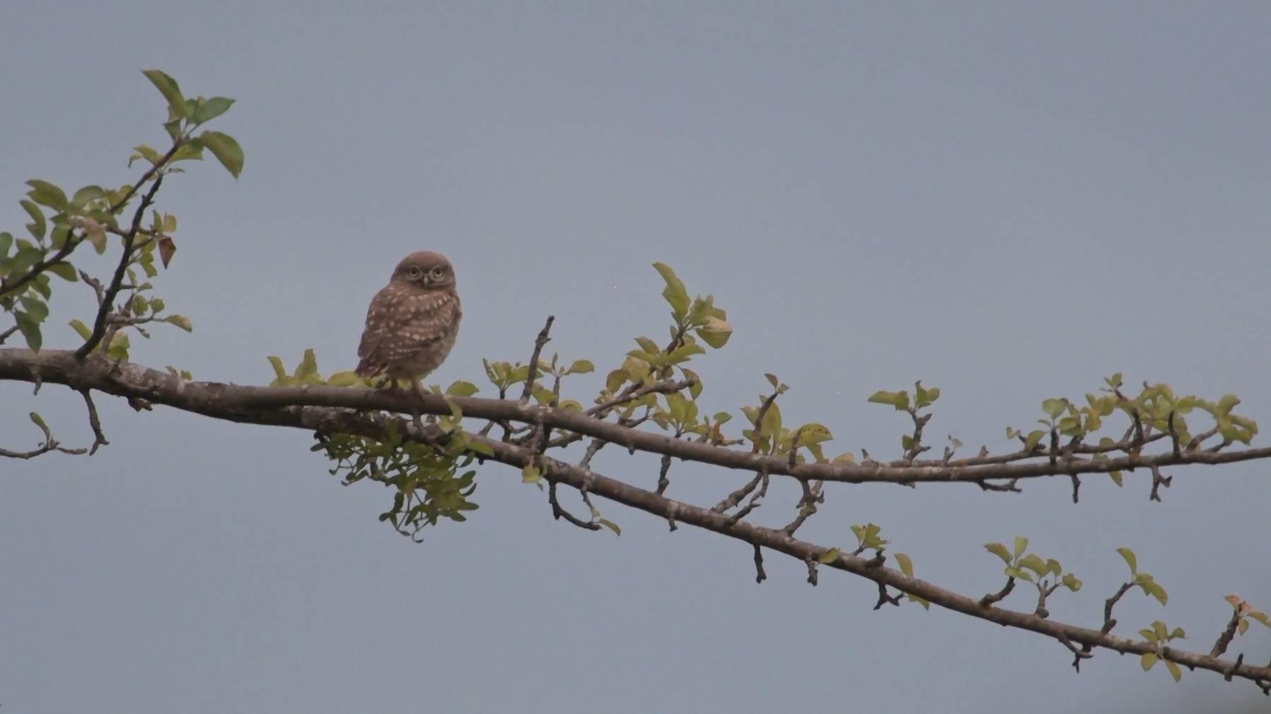 Vogel des Jahres