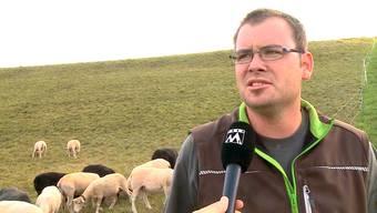 Am Mittwoch wurde in Villigen ein Schaf gerissen – vermutlich von einem grossen Hund. Die Kantonspolizei sucht nun nach dem unbekannten Hundehalter.