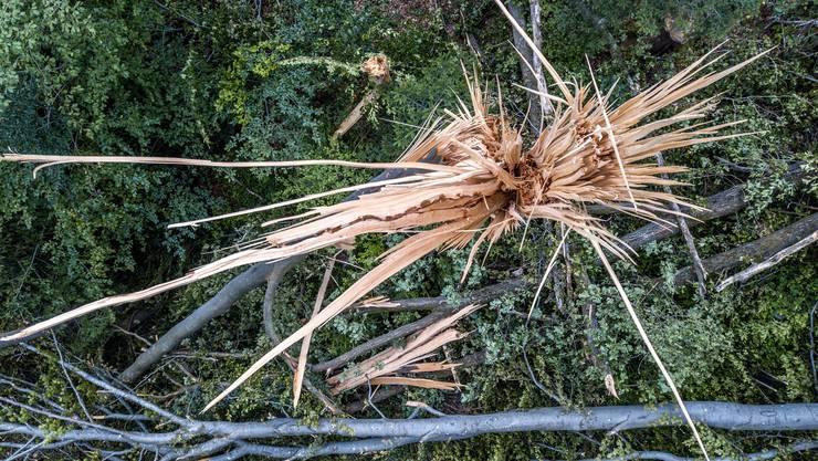 Wie viel das Holz aus den Schweizer Wäldern kosten soll, ist eine umstrittene Frage. Quelle: Pius Amrein