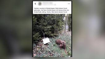 In Niderbipp wird ein Hund im Wald ausgesetzt. Dort angebunden und mit einem Brief hinterlassen, wurde er von Passanten gefunden.
