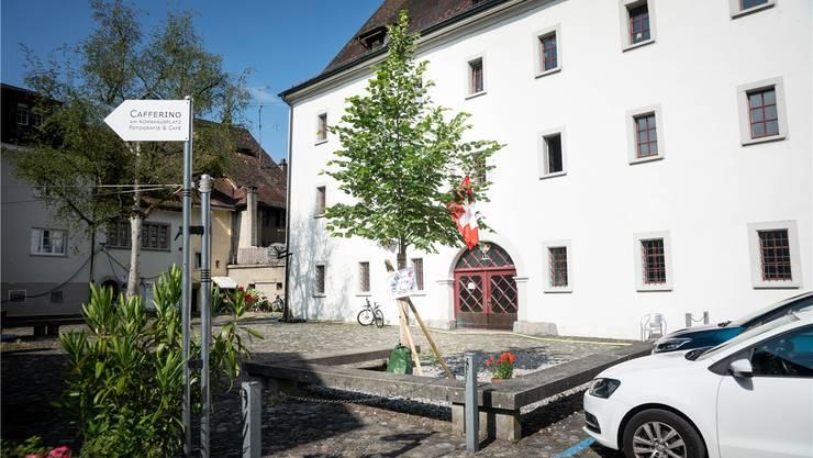 «Ich bin auch eine Platane», steht auf der Linde. Die Stadt ist da anderer Meinung – sie wird den Baum in die Badi verpflanzen.