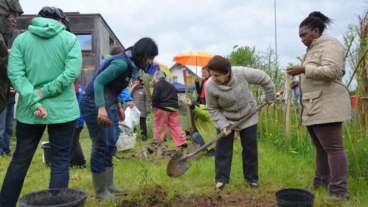 Viviana pflanzt gemeinsam mit Nazira und Ayanda (von links) einen Kornelkirschbaum