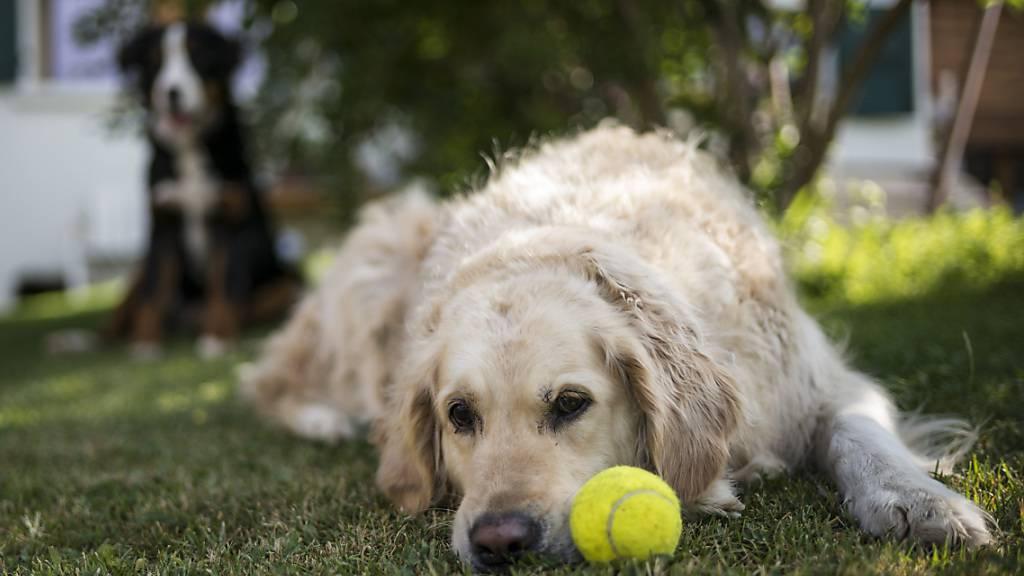 Hunde verspüren nicht mehr Lust, mit grosszügigen Leuten zu spielen als mit knausrigen Menschen. (Themenbild)