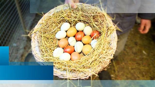 ZüriNews — Sonntag, 1. April 2018 — Ganze Sendung