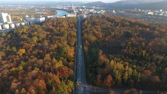Ideale Bedingungen für eine verhältnismässig kostengünstige Verbreiterung: Die heute dreispurige Rheinfelderstrasse durch den Hardwald.