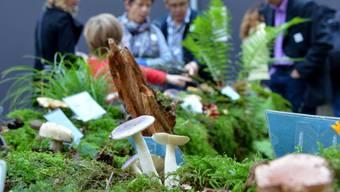 Pilzausstellung Zwingen