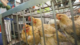 Schuld am Tod einer weiteren Person: Vogelgrippevirus aus Chiina.