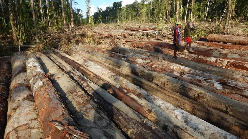 Mindestens 13'634 Pflanzen auf Neuguinea - Insel-Weltrekord!