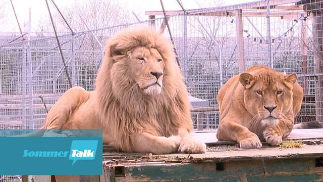 Sikypark – Neues Zuhause für René Stricklers Raubkatzen