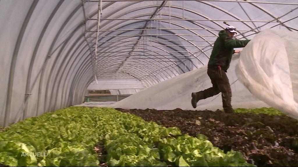 Auf den Bauernhöfen mangelt es wegen des Coronavirus an Arbeitskräften