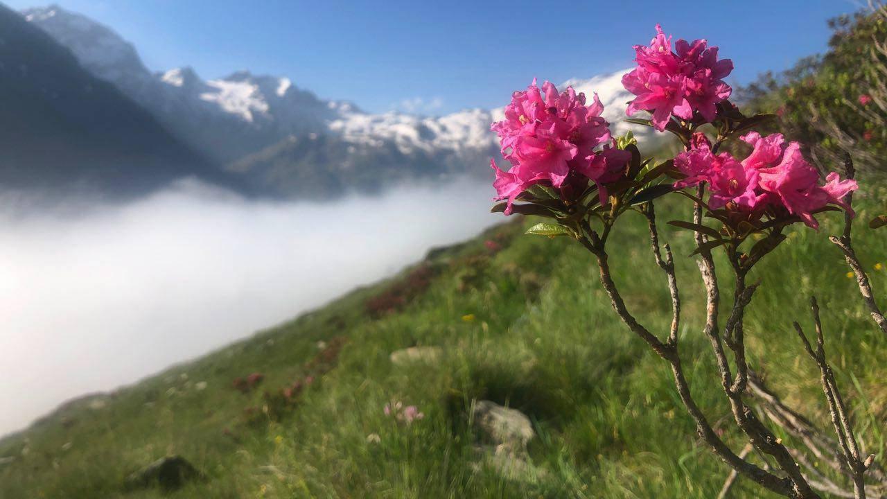 Die Natur rund um den Pizzo Groppera ist wunderschön. (© Radio 24)