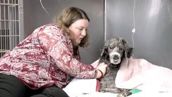 Alltag im Tierspital – eine Videoreportage, Teil I.