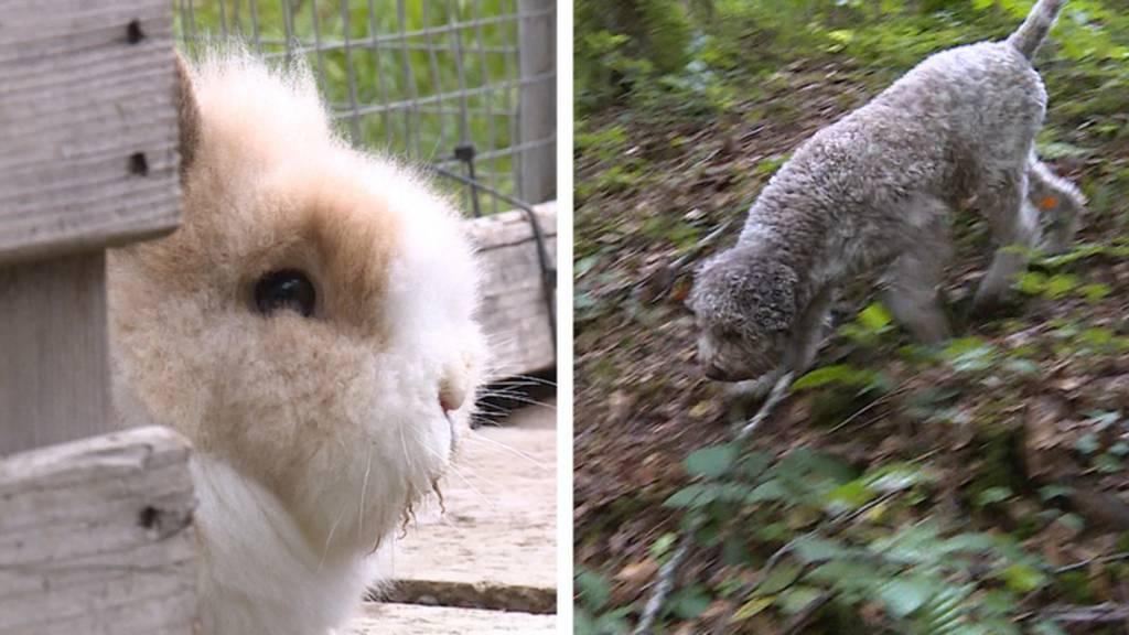 Trüffelhunde / Lebensabend im Tierheim