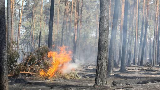 Mahnung vor Waldbrandgefahr in Zentralschweizer Kantonen