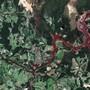 Nach dem Dammbruch an der Mine Córrego do Feijão am 25. Januar ergossen sich rund zwölf Millionen Kubikmeter Schlamm auf eine Fläche von etwa 290 Hektar. Mindestens 169 Menschen kamen dabei ums Leben. (Archivbild)