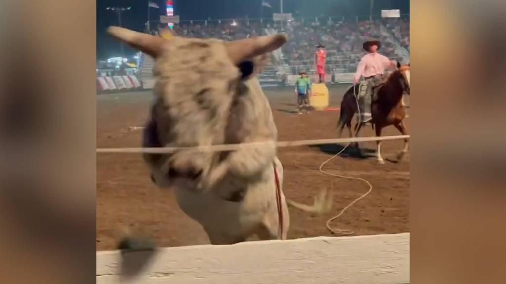 Schockmoment in den USA: Zuschauer entgehen Stier-Attacke ganz knapp