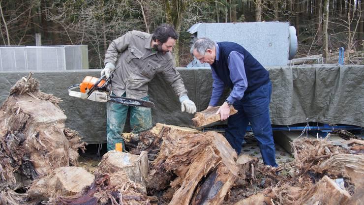 Daniel Nievergelt und Fritz Schweingruber wählen Proben aus dem Holz aus, das an die WSL transportiert wurde. Foto: WSL / Gottardo Pestalozzi