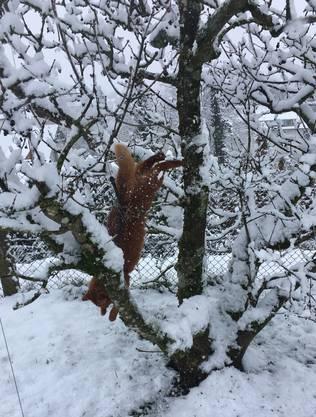 Solch ein Winterzauber macht doch tierisch Spass!