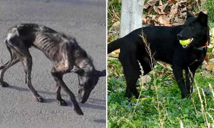 «Er sah aus wie aus einem Horror-Film»: Die erstaunliche Geschichte von Billy, dem griechischen Strassenhund
