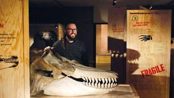 Naturama-Kurator Holger Frick mit dem geheimnisumwobenen Schädel und dem Büffelkopf im Hintergrund.