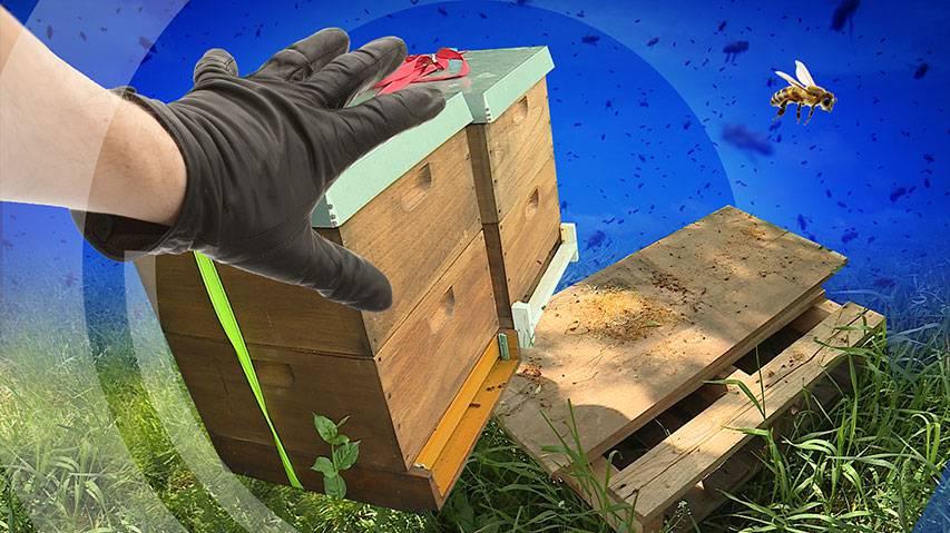 Schon wieder wurden ganze Bienenvölker gestohlen