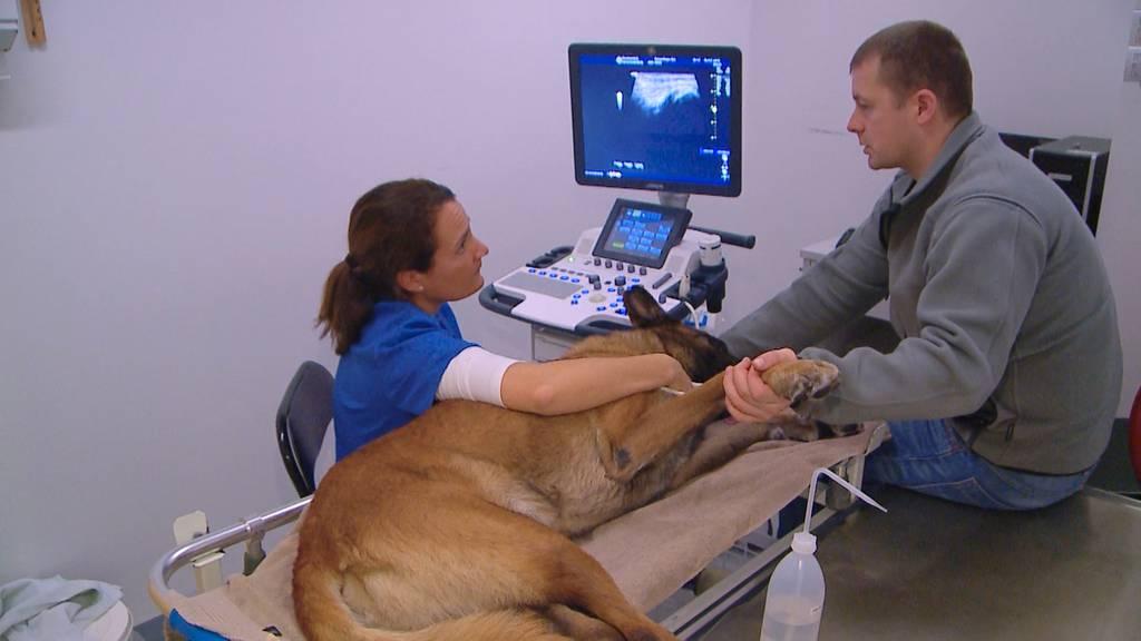 Besuch in der Tierklinik: Der Alltag eines Tierarztes