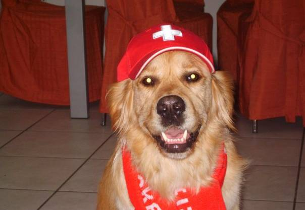 Hund in rot-weiss. Hopp Schwiiz!