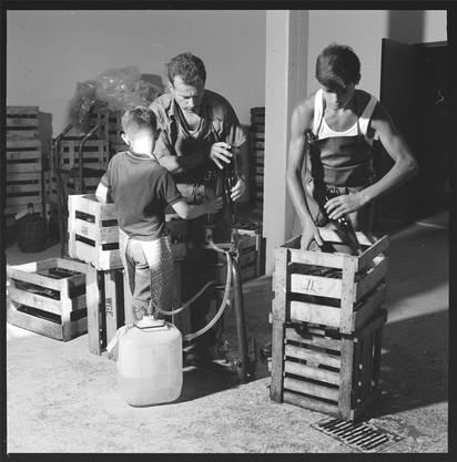 Das Keltern bringt bis heute viel Handarbeit mit sich – wie hier das Spülen der Flaschen vor dem Abfüllen in der Spitaltrotte (1972).