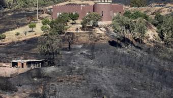 Die Waldbrände an der Algarve im Süden Portugals haben bereits 21'000 Hektar Pinien- und Eukalyptus-Wälder zerstört.