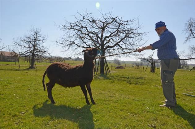 Globi, hier mit Viehzüchter Hansruedi Friedli, im Alter von zehn Monaten.