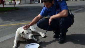 Vorgezogene Hundstage: Herrenlose Hündin nimmt in Muttenz klimatisierten Bus