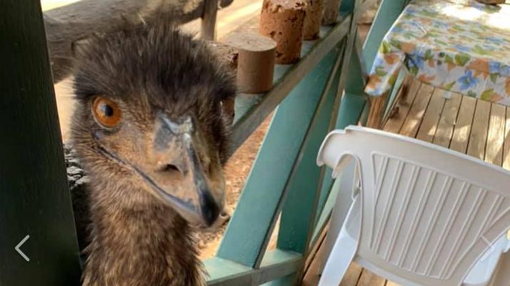 Hotel bestraft Emus mit Hausverbot