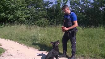 Ace wird derzeit zum Schutz- und Suchhund bei der Grenzwache Rheinfelden ausgebildet. Dabei lernt der Schäferhund spielerisch für seine kommenden Aufgaben.