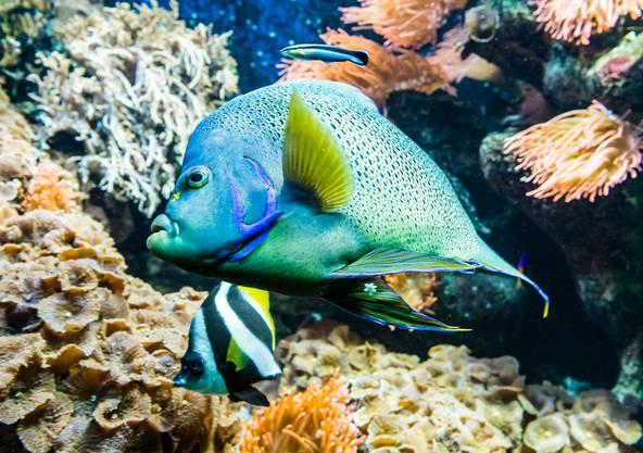 90 Prozent der Korallen im Zoo Basel stammen aus eigener Zucht.