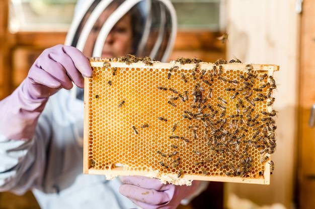 Ursula Müller ist Imkerin in Königsfelden (Windisch). Fotografiert bei ihrem Bienenhaus, wo sie 10 Völker von Honigbienen hält.