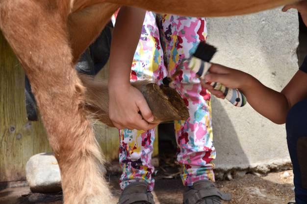 Das Auskratzen der Hufe ist gar nicht so einfach, besonders wenn das Pony seinen Huf nicht hinhalten will