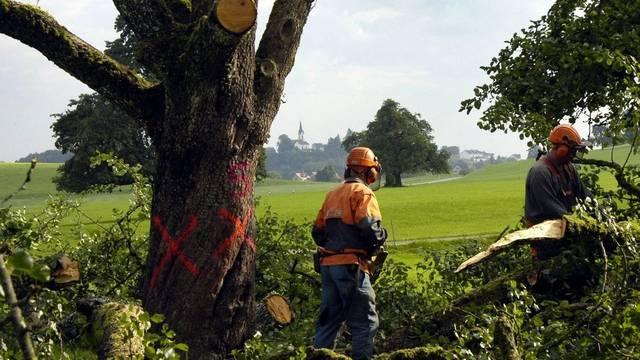Gegen die Zwangsrodung der vom Feuerbrand befallenen Birnbäume hatte sich ein Bauer gewehrt (Archivbild)